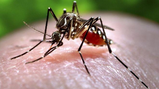 Thế giới có điên đảo không nếu loài muỗi biến mất hoàn toàn? - Ảnh 1.