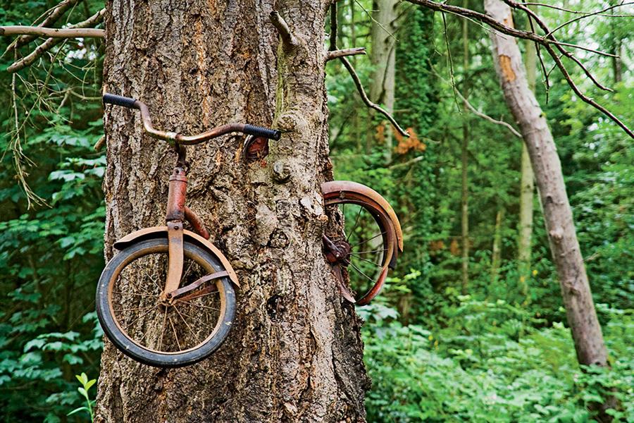 Đời sống: Cây xe đạp nổi tiếng ở Washington và câu chuyện ít người biết phía sau