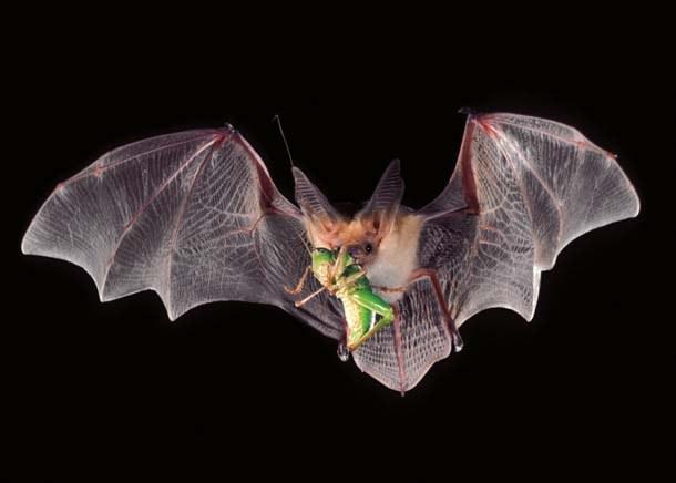Thế giới có điên đảo không nếu loài muỗi biến mất hoàn toàn? - Ảnh 4.
