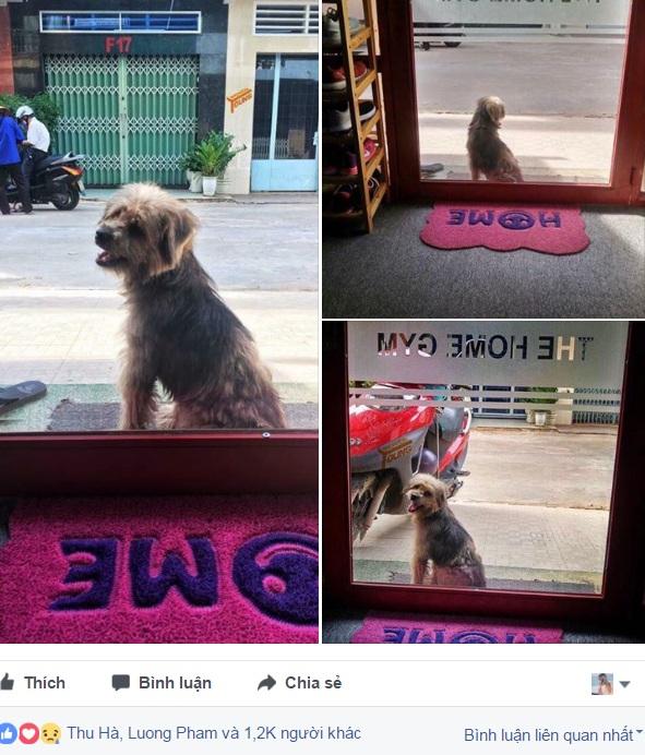 Xúc động nhất Facebook hôm nay: Chú chó ở Đồng Nai quay về tìm chủ cũ sau 3 năm bị bắt đi 1