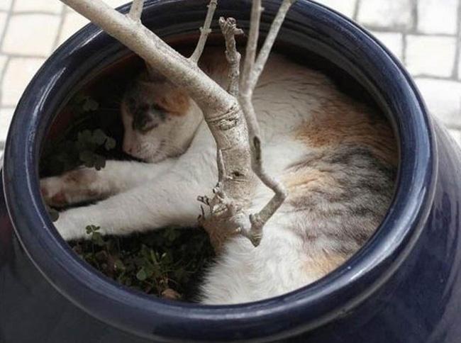 Muôn vàn kiểu chơi trốn tìm hài hước của các thánh mèo - Ảnh 15.