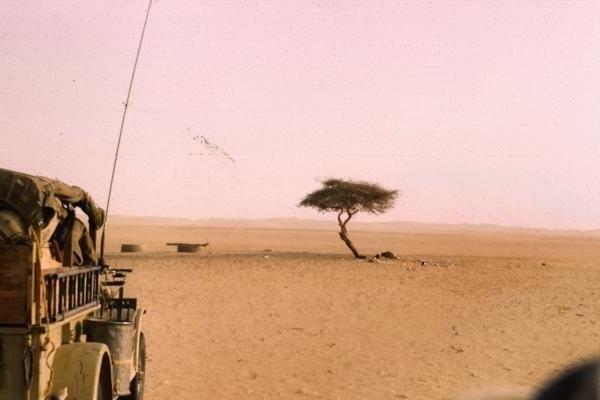 Chuyện chiếc cây cô độc nhất hành tinh và thông điệp ẩn giấu đằng sau đó - Ảnh 1.