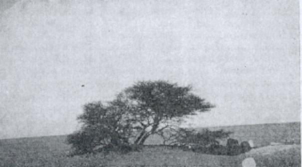 Chuyện chiếc cây cô độc nhất hành tinh và thông điệp ẩn giấu đằng sau đó - Ảnh 2.