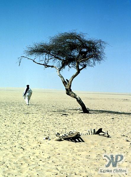 Chuyện chiếc cây cô độc nhất hành tinh và thông điệp ẩn giấu đằng sau đó - Ảnh 4.