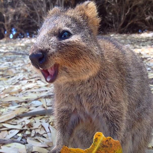Chỉ ước mình được như loài chuột túi mini hạnh phúc và vui vẻ nhất thế gian - Ảnh 9.