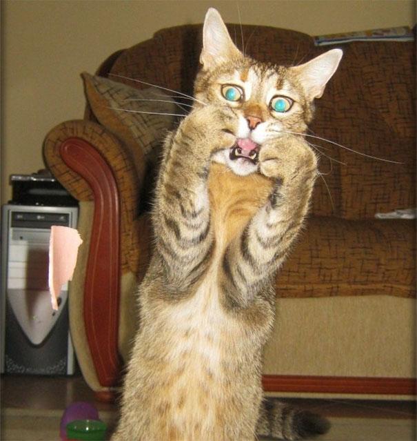 17 biểu cảm chứng tỏ mèo là bọn diễn sâu nhất quả đất - Ảnh 29.
