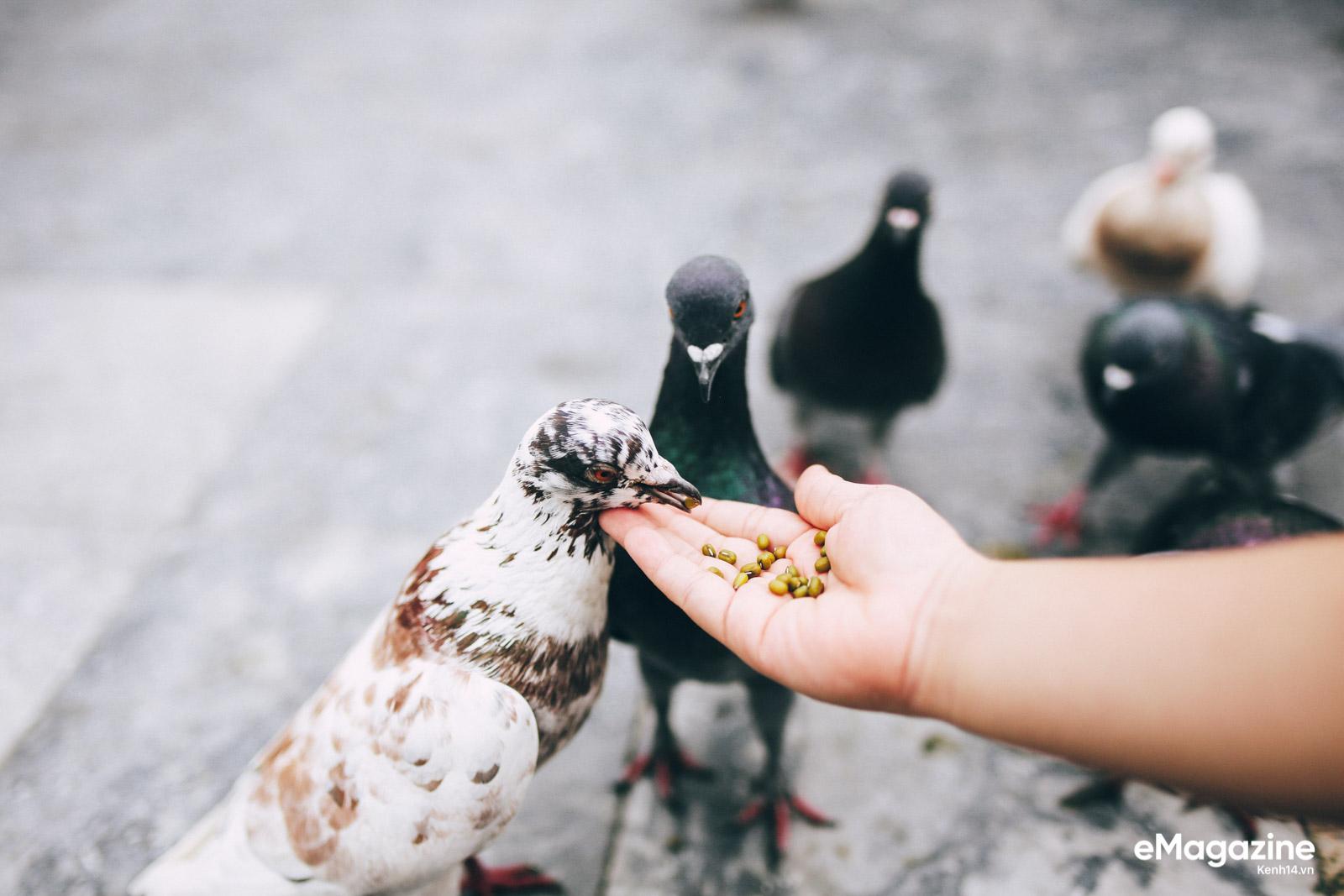 Những người Sài Gòn khùng nuôi chim trời thú hoang - Ảnh 20.