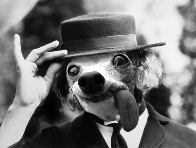 Chú chó thè lưỡi mặt ngố bị các thánh photoshop rảnh việc lôi ra chế ảnh - Ảnh 33.