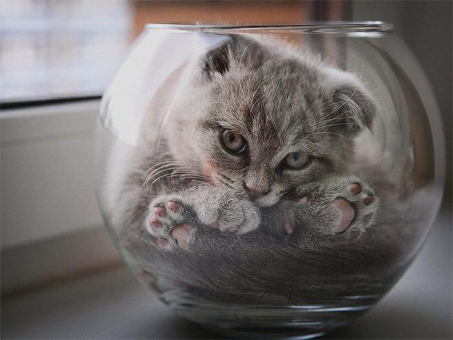 Mèo có phải là một loại chất lỏng? Đáp án cực bất ngờ nhé các bạn! - ảnh 5