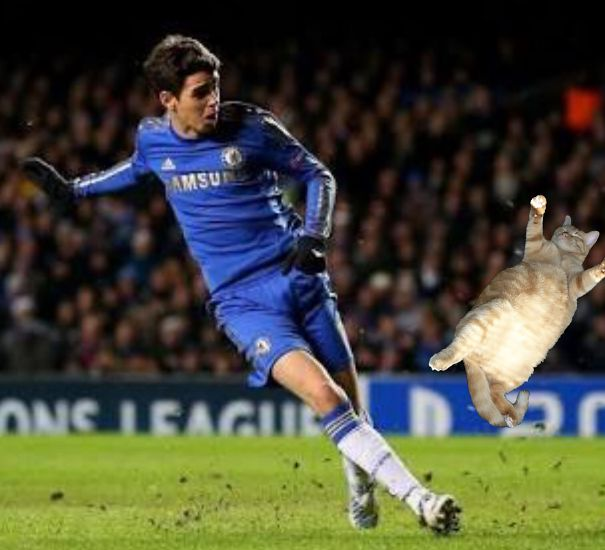 Cười không nhặt được miệng với bộ ảnh mèo xuất hiện trên sân bóng đá - Ảnh 2.
