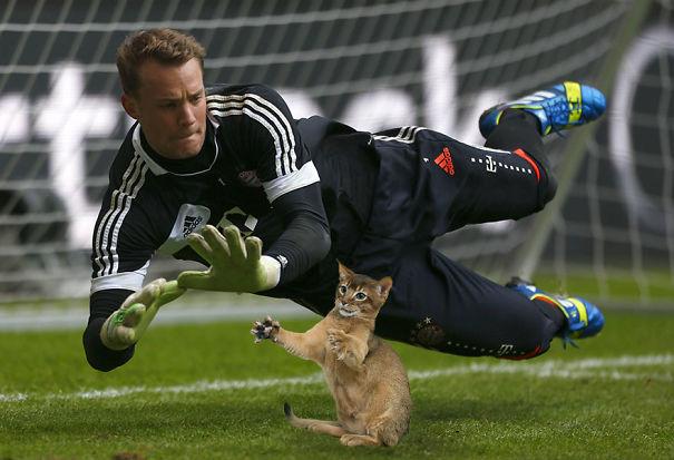 Cười không nhặt được miệng với bộ ảnh mèo xuất hiện trên sân bóng đá - Ảnh 10.