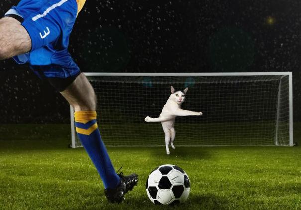 Cười không nhặt được miệng với bộ ảnh mèo xuất hiện trên sân bóng đá - Ảnh 11.