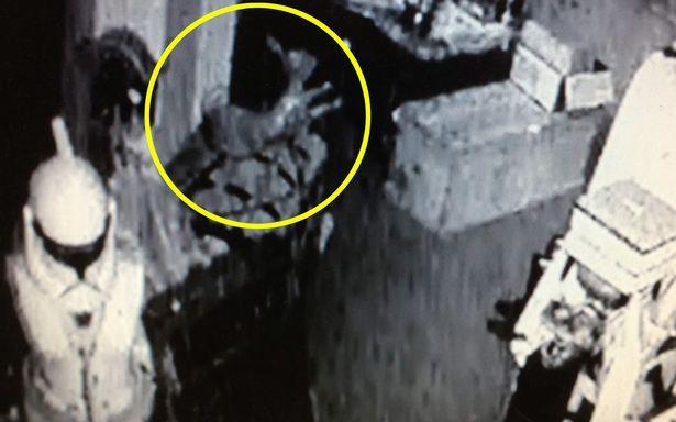 Mở camera xem, chủ cửa hàng đồ cổ thấy ngựa gỗ tự đung đưa rồi rơi khỏi kệ một cách bí ẩn - Ảnh 2.