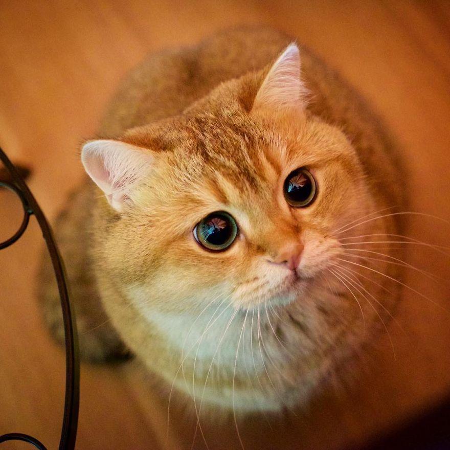 Chú Mèo đi Hia Siêu đáng Yêu Ngay Giữa đời Thực Khiến Cư
