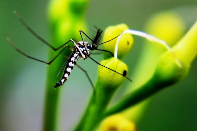Thế giới có điên đảo không nếu loài muỗi biến mất hoàn toàn? - Ảnh 5.