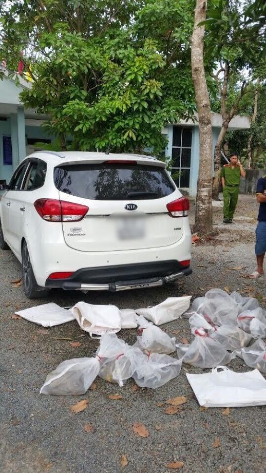 Nhóm người đi ô tô mang 10 túi rắn độc định phóng sinh lên núi ở An Giang - Ảnh 2.