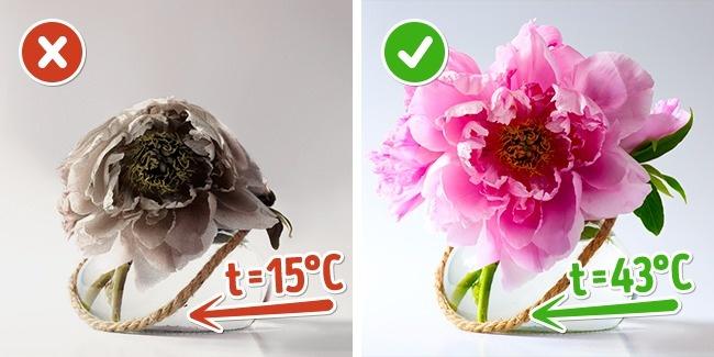 10 mẹo giữ hoa tươi lâu bạn chỉ ước mình biết sớm hơn - Ảnh 3.