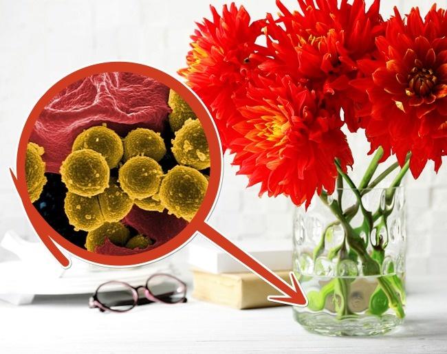 10 mẹo giữ hoa tươi lâu bạn chỉ ước mình biết sớm hơn - Ảnh 9.