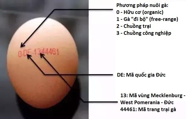 Không chỉ người mà cả… trứng gà cũng có chứng minh thư, bạn biết không? - ảnh 2