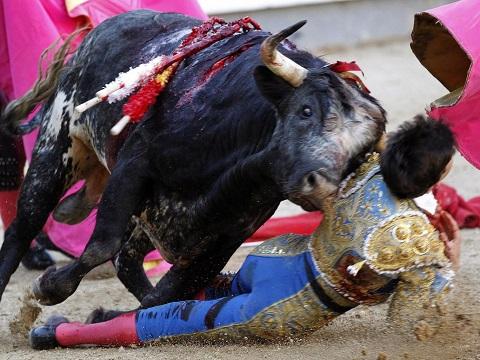 Những vụ bò tót húc người khủng khiếp trên thế giới năm nay - Ảnh 2.