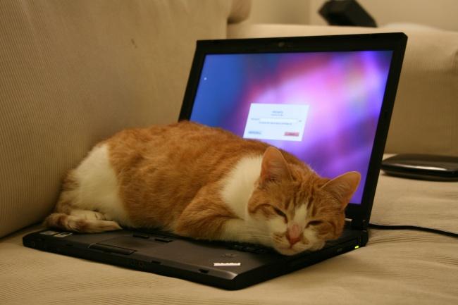12 việc bạn thường làm khiến laptop bị tàn phá một cách nhanh chóng - Ảnh 1.