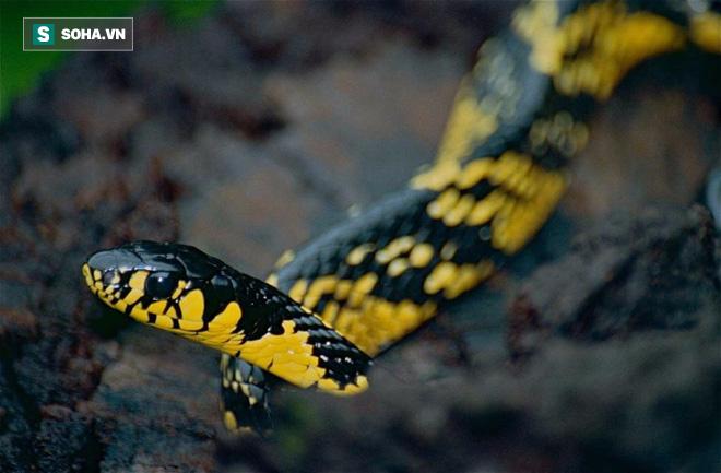 Hàng nghìn con rắn đột nhập vào nhà dân ở Bangkok, Thái Lan: Nguyên nhân đến từ đâu? - ảnh 1
