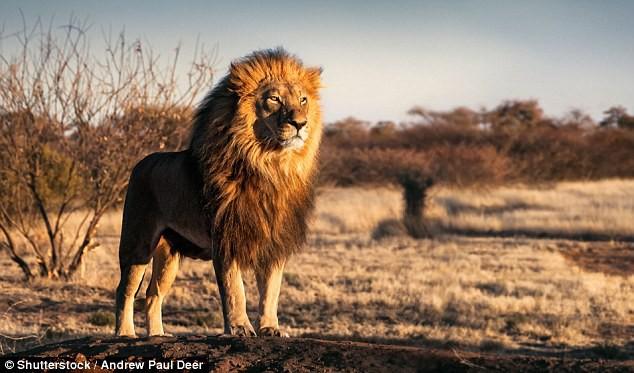 Số phận con người sẽ thảm khốc như thế nào nếu bị các loài động vật này tấn công? - Ảnh 2.