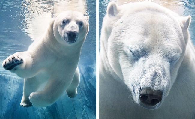 Động lòng ánh mắt trong bộ ảnh các loài động vật có nguy cơ tuyệt chủng - Ảnh 9.