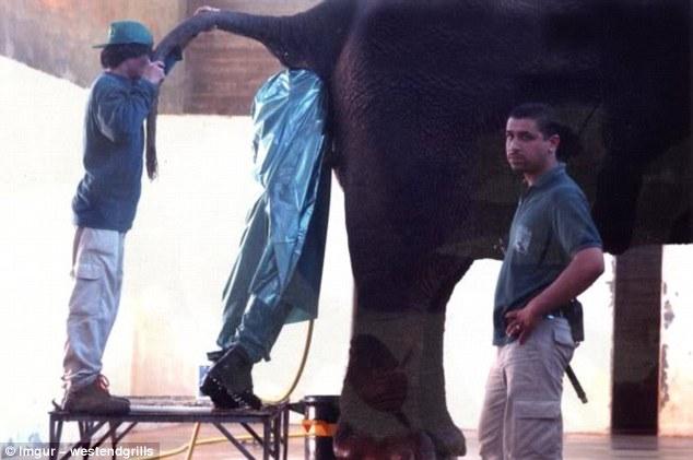 Ngửi nách ứng viên hay chui vào mông voi... những công việc có cho cả bao tải tiền cũng ít ai muốn làm - Ảnh 5.