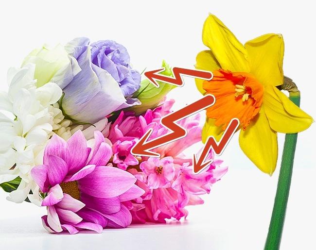 10 mẹo giữ hoa tươi lâu bạn chỉ ước mình biết sớm hơn - Ảnh 19.