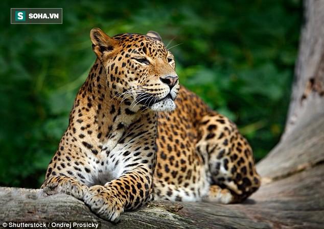 Số phận con người sẽ thảm khốc như thế nào nếu bị các loài động vật này tấn công? - Ảnh 3.