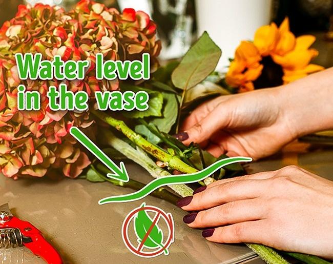 10 mẹo giữ hoa tươi lâu bạn chỉ ước mình biết sớm hơn - Ảnh 7.