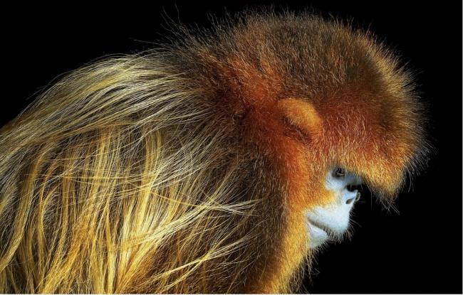 Động lòng ánh mắt trong bộ ảnh các loài động vật có nguy cơ tuyệt chủng - Ảnh 4.