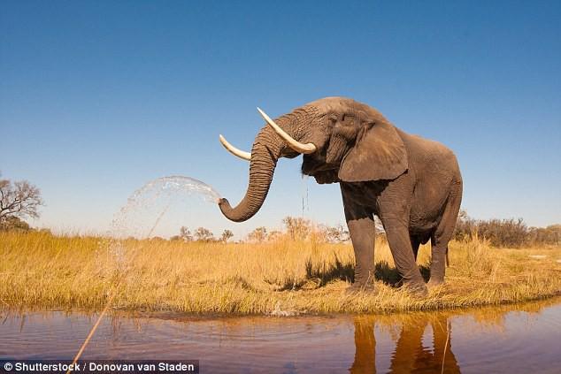 Số phận con người sẽ thảm khốc như thế nào nếu bị các loài động vật này tấn công? - Ảnh 7.