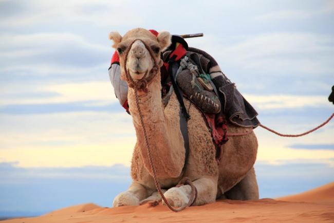 Chết là bất hợp pháp ở thị trấn Na Uy, Ả Rập Saudi phải nhập khẩu lạc đà... và 8 sự thật ít người biết - Ảnh 15.