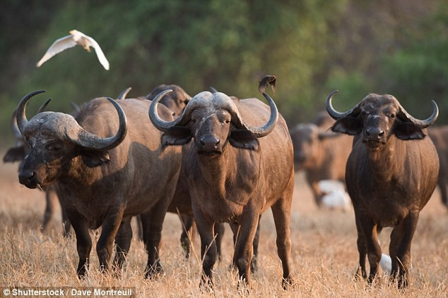 Số phận con người sẽ thảm khốc như thế nào nếu bị các loài động vật này tấn công? - Ảnh 10.
