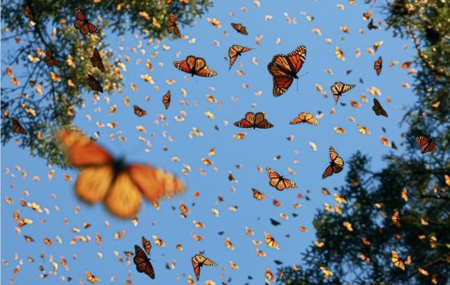 Động lòng ánh mắt trong bộ ảnh các loài động vật có nguy cơ tuyệt chủng - Ảnh 8.