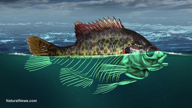 Sinh vật tại vùng biển sâu nhất hành tinh cũng bắt đầu bị ảnh hưởng bởi con người - Ảnh 4.