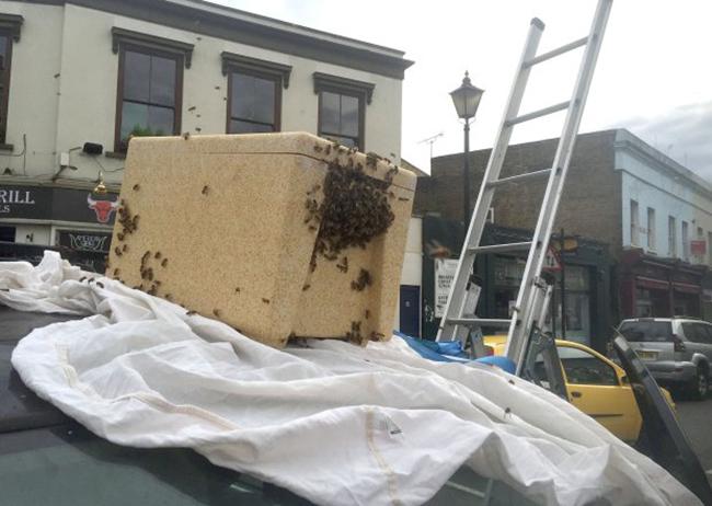 Hàng nghìn con ong lúc nhúc làm tổ trên cột đèn giao thông - Ảnh 3.