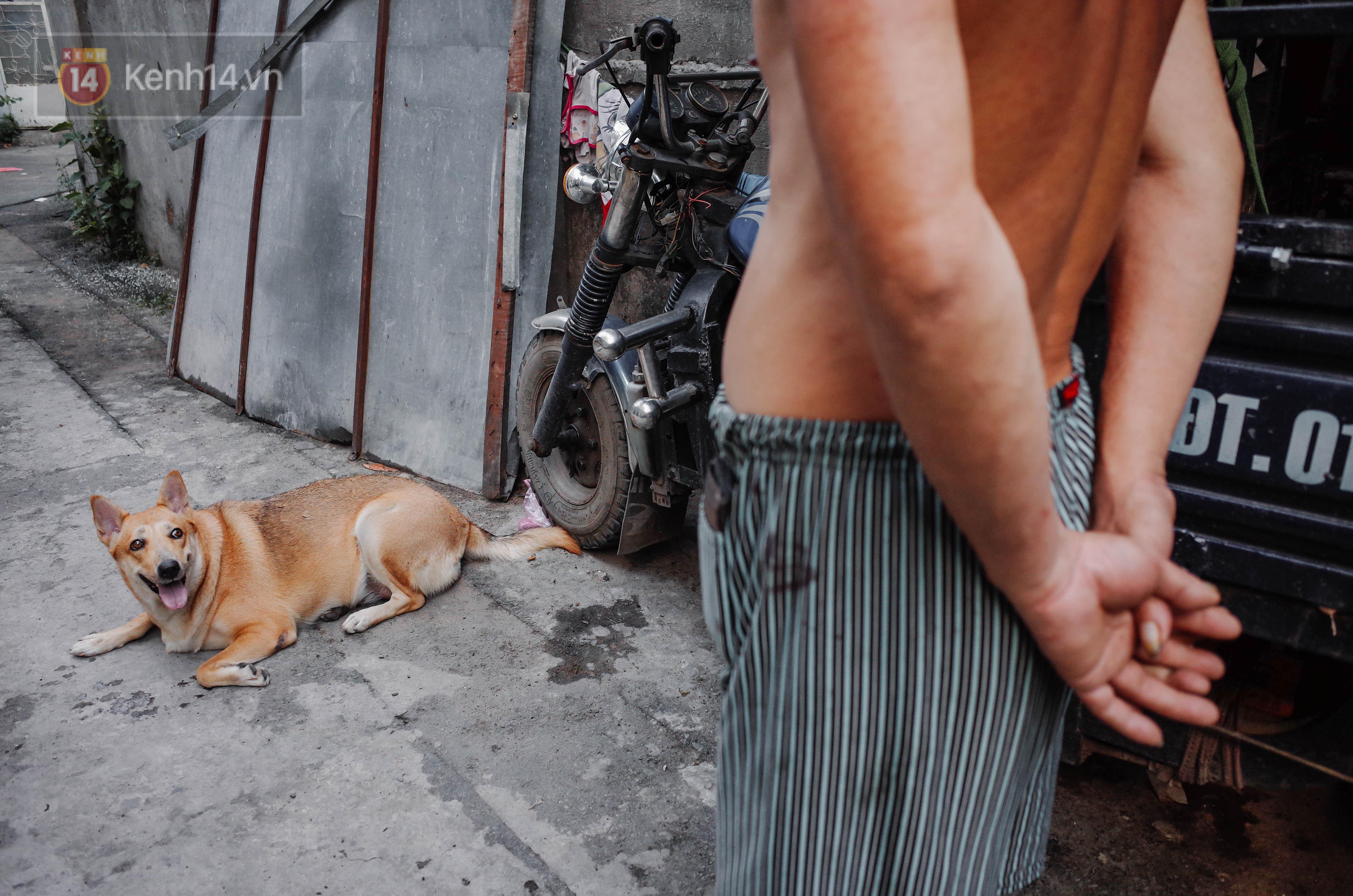 Đời sống: Gặp Gấu - chú chó cá tính nhất Sài Gòn: Chủ mua gì cũng xung phong xách hộ, không cho theo thì hờn mát bỏ ăn!