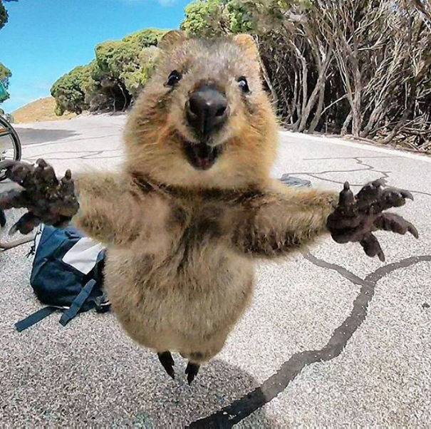 Chỉ ước mình được như loài chuột túi mini hạnh phúc và vui vẻ nhất thế gian - Ảnh 17.