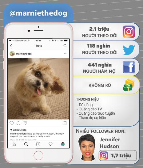 7 thú cưng cute lạc lối nổi đình đám trên Instagram nhất định bạn nên ghé thăm - Ảnh 5.