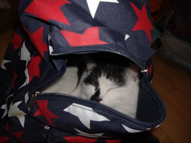 Muôn vàn kiểu chơi trốn tìm hài hước của các thánh mèo - Ảnh 35.