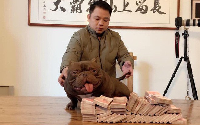 Chú chó trị giá 2,6 tỷ đồng mà đại gia Biên Hòa lặn lội sang Trung Quốc mua bằng được là giống cơ bắp siêu khủng, đắt nhất thế giới
