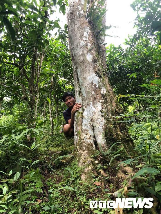 Choáng ngợp giữa khu rừng báu vật chè hoang dã ngàn năm tuổi ở Tây Côn Lĩnh - Ảnh 5.