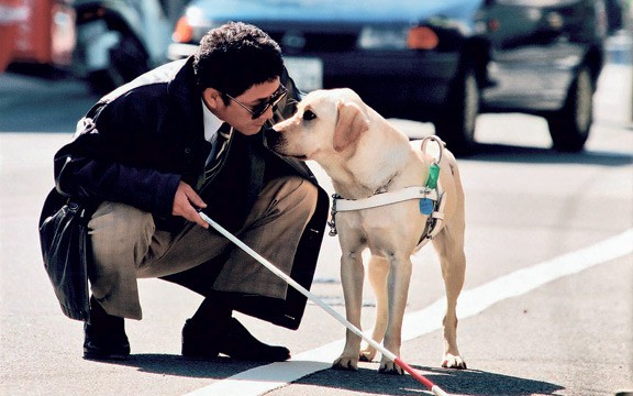 Năm Mậu Tuất và 5 câu chuyện cảm động về loài chó của điện ảnh Nhật Bản - ảnh 4