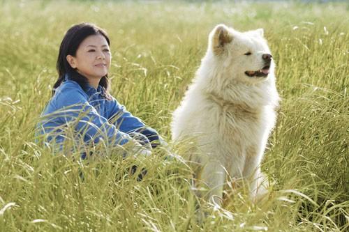 Năm Mậu Tuất và 5 câu chuyện cảm động về loài chó của điện ảnh Nhật Bản - ảnh 10