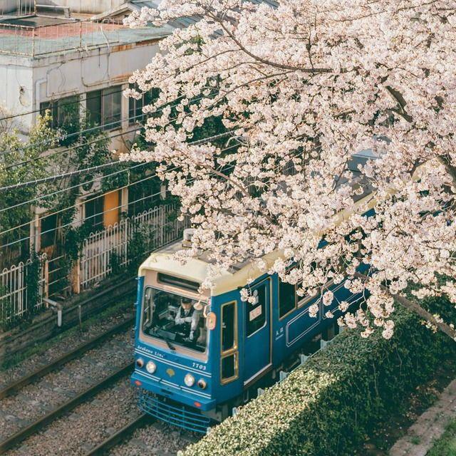 Cuộc sống, cái chết và sự tái sinh - triết lý gói gọn trong một đóa hoa Sakura - Ảnh 2.