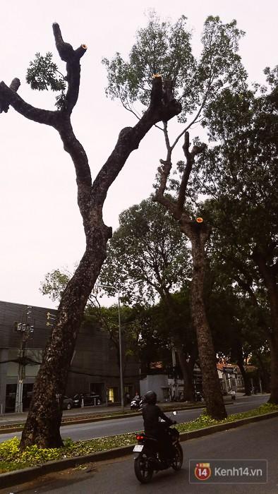 Chùm ảnh: Người Sài Gòn đặt hoa hồng trên gốc những hàng cây xanh bị đốn hạ ở đuờng Tôn Đức Thắng - ảnh 18