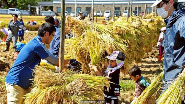 Làng thần kỳ Nhật Bản: Từ nghèo nhất đến nổi tiếng khắp cả nước, doanh số bán gạo tăng 400% nhờ biến ruộng lúa thành tranh - ảnh 2